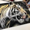 色鉛筆で描いた虎の絵「毛並みの表現ヤバすぎ」と感動の声多数