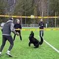 バレーボールのトスが天才犬01