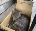 雨宿り猫と千光寺山ロープウェイの攻防 担当者の思いやりにほっこり