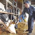 コロナ禍による人手不足の中、懸命に乳牛を世話する石垣さん(北海道稚内市で)