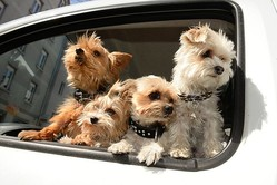 ペットショップでは子犬、子猫でないと売れないという(イメージ、AFP=時事)