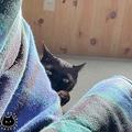 「黒猫は見た」にゃんこが伝統的なスタイルで飼い主さんを覗き見