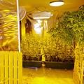遠藤容疑者が大麻草を栽培していたとみられるマンションの室内(道警提供)