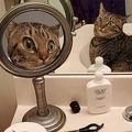 「どうなってるニャ!?」2種類の鏡に映る自分に驚く猫 ネットで反響