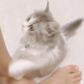 飼い主にアピールする子猫