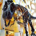 ティラノサウルスは人間並みにゆっくり歩いていた可能性 調査で判明