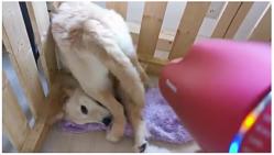 お尻を乾かされている犬