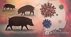 DMZで見つかった死んだ野生イノシシがアフリカ豚コレラに感染していたことが確認された(イラスト)=(聯合ニュース)