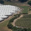 米カリフォルニア州カーピンテリアで、ブドウ園(右)の横につくられた大麻栽培温室(2019年8月6日撮影)。(c)DAVID MCNEW / AFP