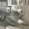 京都・梅宮大社にいた猫(提供・西方由美さん)