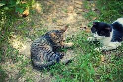 私は猫が苦手っていったのに…。 同じ敷地内で猫を自由に飼う義妹に不満が【お悩み相談】