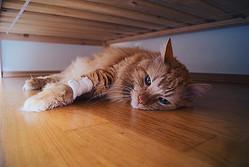 具合が悪い時、猫は一目につかない場所に身を隠す(Ph:Getty Images)
