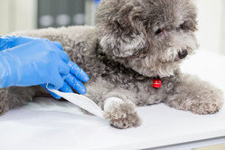 愛するペットの主治医は、どのようなことに注意して選べばいいのだろう Photo:PIXTA