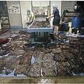 ゴンドウクジラの胃から見つかった大量のゴミ袋(画像は『Reuters 2018年6月3日付「Plastic bags jam stomach of dead pilot whale in Thailand」』のスクリーンショット)