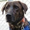 愛犬の散歩についてきた見知らぬ犬 1年がかりで保護し「家族」に