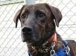 愛犬たちの散歩に楽しそうについてきた「見知らぬ黒い犬」…1年がかりで保護して、3頭目の愛犬に