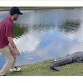 ゆっくりとアリゲーターに近づくゴルファー(画像は『Insider 2020年12月17日付「A brave golfer risked it all to retrieve his ball from the tail of a 10-foot alligator in Florida」(YouTube/NBC)』のスクリーンショット)