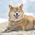 愛犬の息づかいがハアハアと荒いときは、熱中症の可能性が