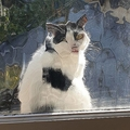プライバシーを侵略してくる猫たち03