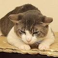 飼い猫に覚せい剤を与えたとして男が起訴された/Courtesy Las Cruces Police Department/Facebook