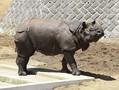 多摩動物公園で50代の男性職員が死亡 サイに襲われた可能性