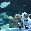 閉鎖中の米水族館を探検する子犬の動画が話題 見てるだけで癒やされる?