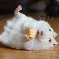 「チーズうめー!」破壊力あるハムスターの画像に反響