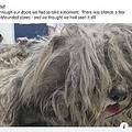 捨て犬に絶句 1.6kg毛刈る 南ア
