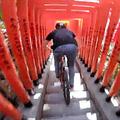 マウンテンバイクで神社の階段下る 投...