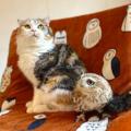 猫&フクロウのカフェに存続の危機 店長の過労に重なった緊急事態宣言