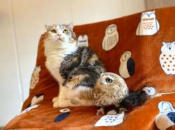 フクロウと猫のコンビで話題 あのカフェが危機「個人の力では限界」
