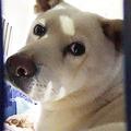 韓国から来日した元食用犬(ケージの隙間より北田氏撮影)