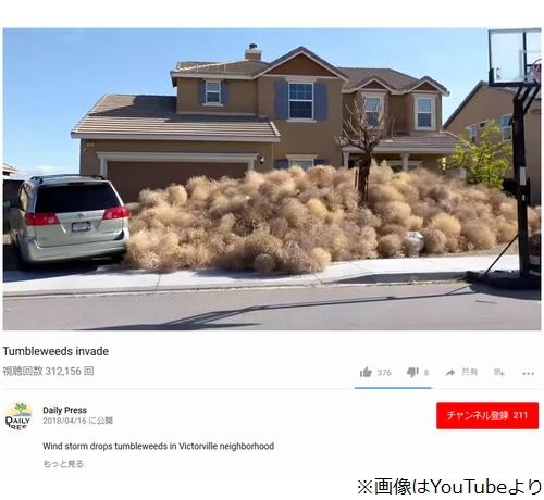 """[画像] """"回転草""""大量発生で家から出られず"""