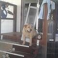 ドッグドアに挟まった犬(画像は『Charmaine Hulley 2020年10月4日付Facebook』のスクリーンショット)
