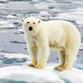 国連が気候変動の現状に警鐘 哺乳類が絶滅すれば復活に数百万年必要