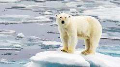 国連が気候変動の現状へ警鐘、哺乳類絶滅すれば復活に数百万年必要