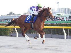 【かしわ記念】JRA出走予定馬
