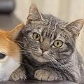 猫が3匹の犬と一緒に「おすわり」「まて」をする動画が話題に