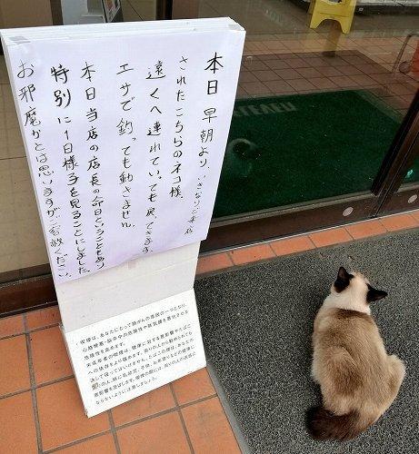 【】元店長の命日に現れた1匹の猫 「こちらのネコ様。遠くへ連れていっても戻ってきます。エサで釣っても動きません」