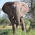 「わが子と記念写真を」ゾウの檻に侵入した父親が虐待容疑で逮捕