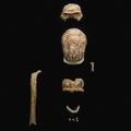 イタリア・サンフェリーチェチルチェーオのガタリ洞窟で発見された、ネアンデルタール人の化石。(上から)正面から見た女性の頭蓋骨、上から見た女性の頭蓋骨、右手の親指の中手骨(右)、成人男性のものとみられる右の大腿骨の骨幹(左)、正面から見た男性のものみられる頭蓋骨(中央)、上から見た顎骨、顎がついた性別不明の前頭部。イタリア文化財省提供(撮影日不明、2021年5月8日提供)。(c)AFP PHOTO / ITALIAN MINISTRY OF CULTURE / HANDOUT