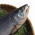 生の鮭なら普通にアニサキスはいる(写真はイメージ)