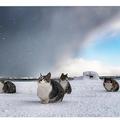 北海道の港町で撮影された猫たちの写真が幻想的 「泣きそうになる」
