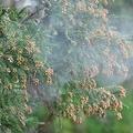 関東や北陸、東北で花粉が大量飛散 東京では3月9日を上回る量に