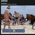 馬に触れとんでもない目に…(画像は『The Sun 2019年7月21日付「LIFE'S A BEACH! Moment Speedo-wearing tourist is kicked in the groin by wild horse after ignoring signs not to pet animals」』のスクリーンショット)