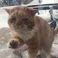 窓をノックするように引っ掻き、助けを求める猫(画像は『Un chat à la fois / One cat at a time 2019年2月14日付Facebook「SVP cette publication date du 2019」』のスクリーンショット)