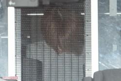 原宿警察署から送検される吉澤容疑者('18年9月7日)