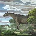 史上最大の陸生哺乳類とみられる「パラケラテリウム」の新種が中国で見つかった/Chen Yuhui