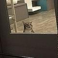 猫が仲間の脱走手助け 監禁処分