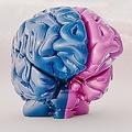 男女の脳に違いはあるのか 現代社会では女性が有利と脳科学者